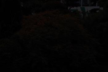 IMGP7397_2.jpg